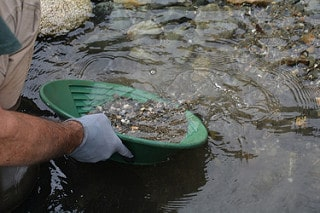 Gold panning in the river